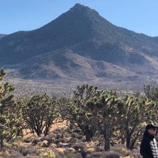 Geology and Joshua tree