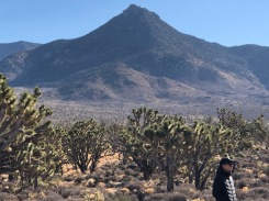 Geology and Joshua tree