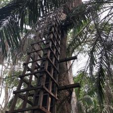 Lekki conserv tree house
